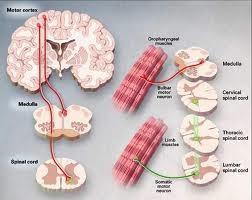 Convulsioni Epilessia